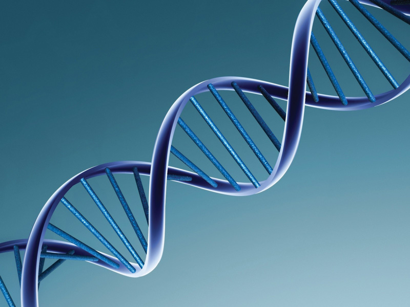 Eighty new genetic cancer markers discovered
