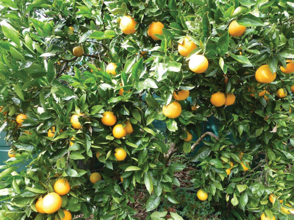 How to: preserve your garden over winter