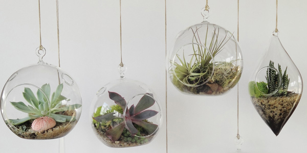 Terrariums: the plant solution for everyone