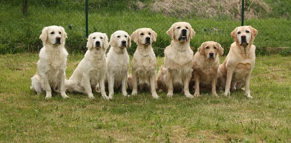 Ku-ring-gai dog day out returns