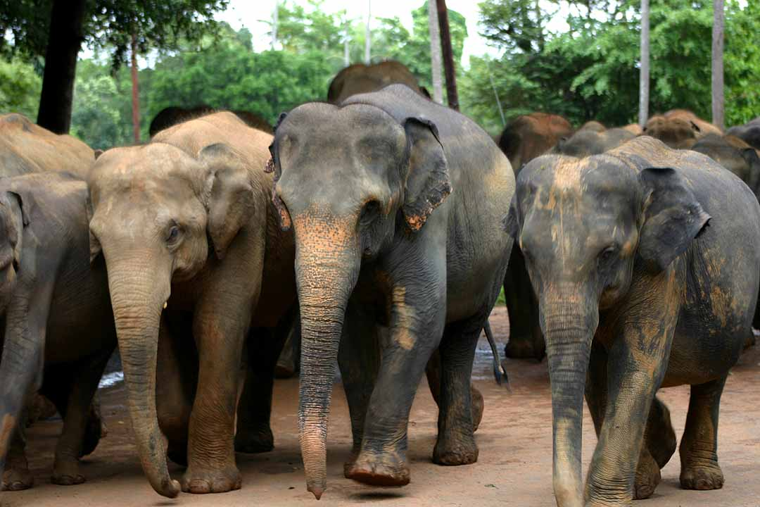 Global March for Elephants, Rhinos and Lions