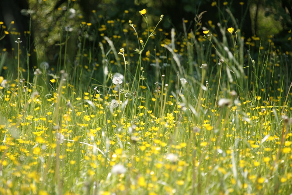 Hay Fever Season is Here!