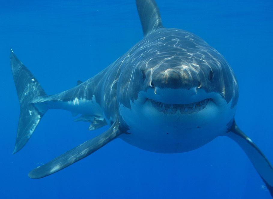 Shark Net Costs