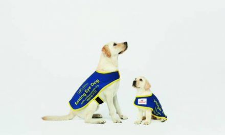 NORTH SHORE GETS INVOLVED IN SEEING EYE DOGS APPEAL