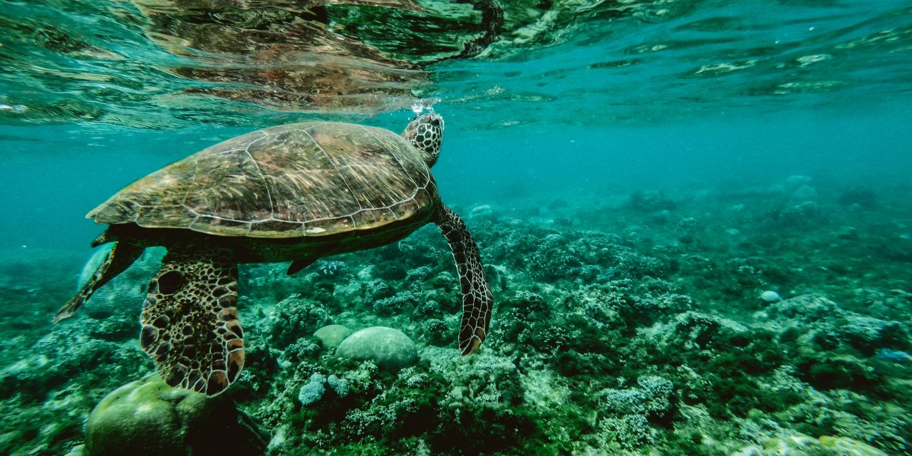 Explore Australia's best oceanic attractions