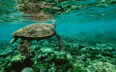 Explore Australia's best oceanic attractions