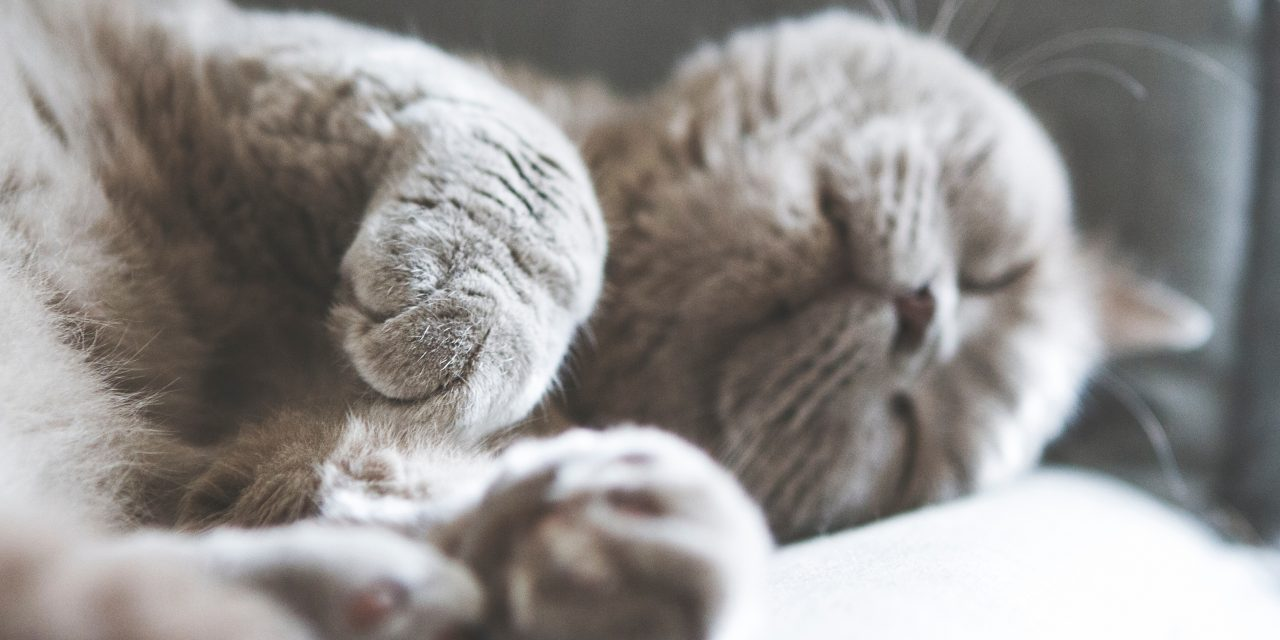 Benefits of Pet-Friendly Rentals