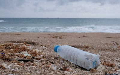 Cutting Down On Single-Use Plastic