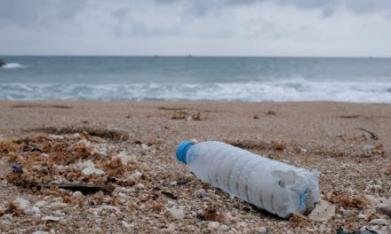 Cutting Down On Single-Use Plastic