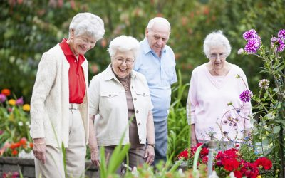 What's On This Senior's Festival