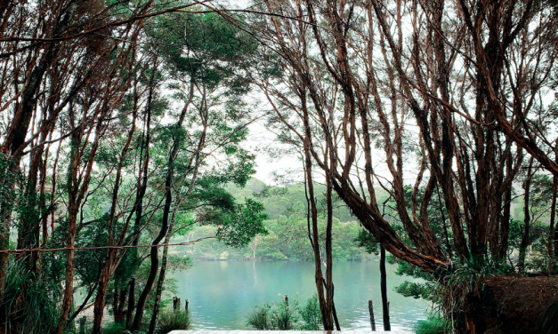 Refresh in the Wilderness of Corinna, Tasmania