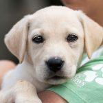 Animal Adoptions on the Rise
