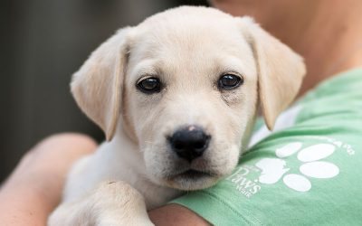 Animal Adoptions on the Rise