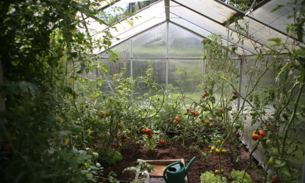 Seed Suppliers Overwhelmed Amid Gardening Boost