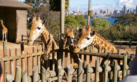 Animal Antics at Taronga Zoo