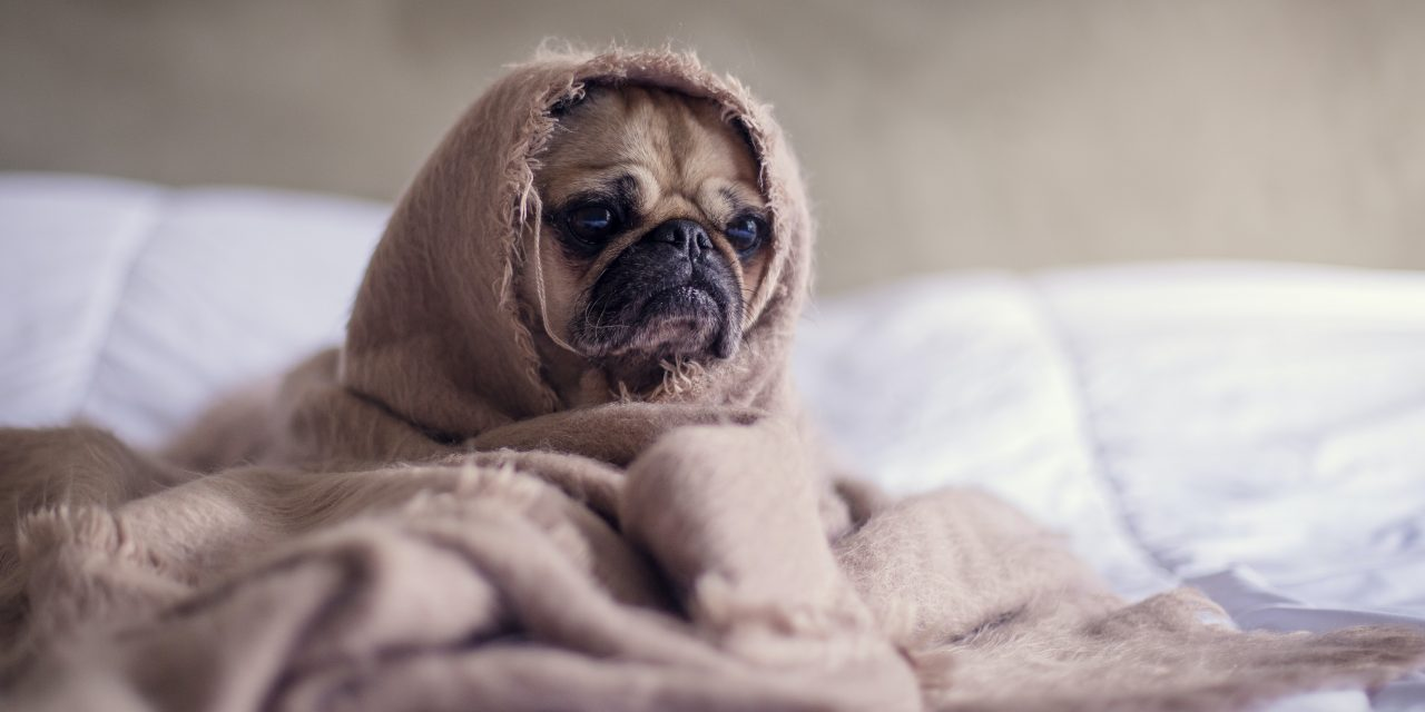 Coronavirus dreams: why we get them and how to sleep better