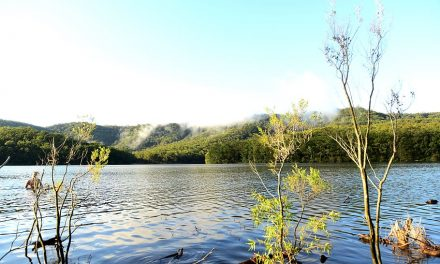 Kangaroo Valley: The Perfect Weekend Getaway