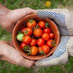 Veggie Gardens for Beginners