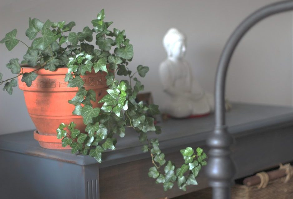 The Best Indoor House Plants