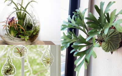 All you need to know about Indoor Air Plants
