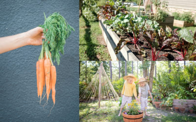 How to Create your own Herb and Veggie Garden